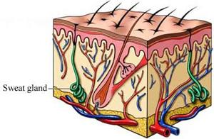 hyperhidrosis of the feet